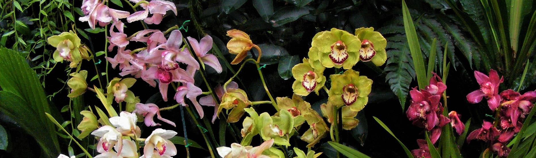 Faszinierende Welt der lustigen Blumen