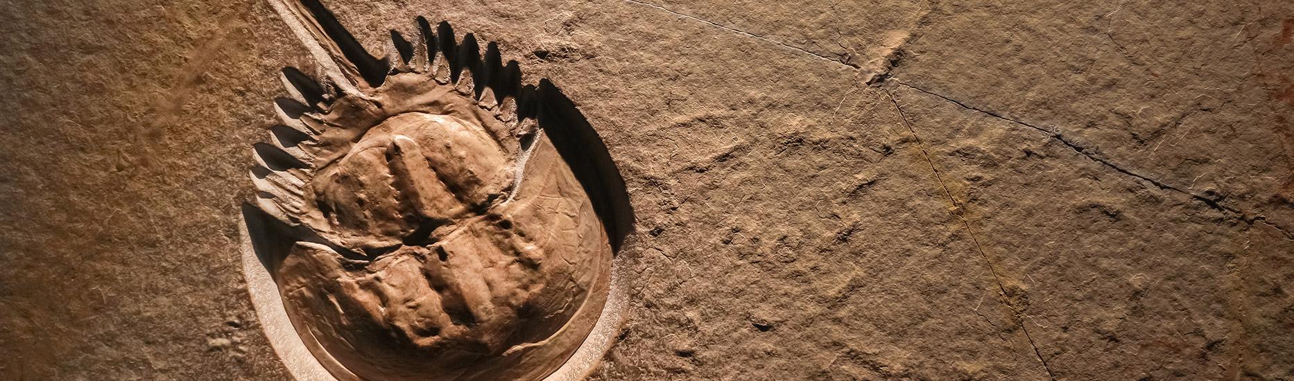 Fossilien – Beweis für Evolution?