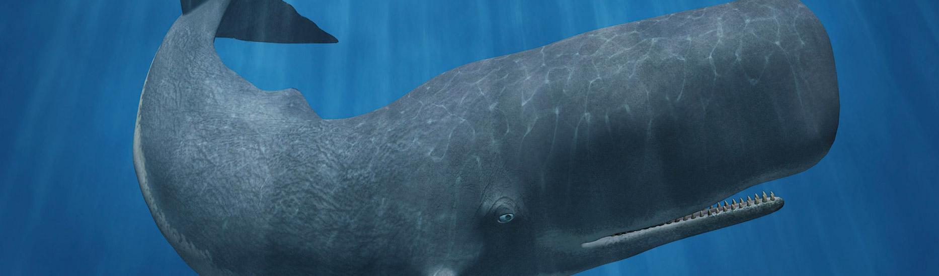 Wie kamen die Wale in die Wüste?