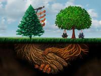 Zwei Bäume, eine Wurzel